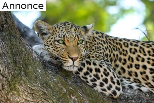 Rejs til regnbuenationen Sydafrika og oplev nye og spændende ting