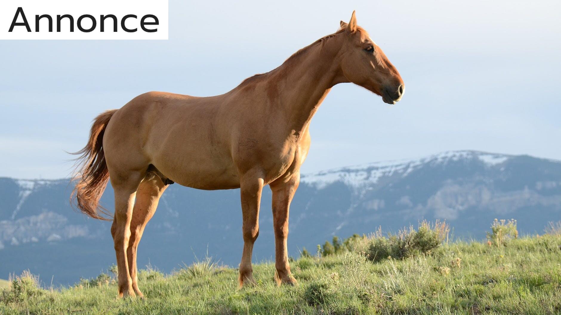 Sådan klæder du dig på som rigtig hestepige