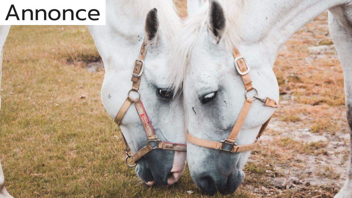 Hestefoder – det bedste redskab i din træning